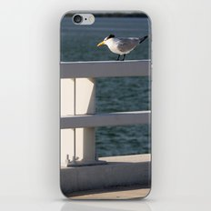 Summertime and the livin is easy  iPhone & iPod Skin