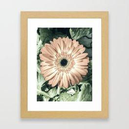 Be Like The Flower... Framed Art Print