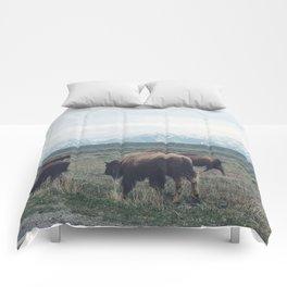 Roaming Buffalo Comforters