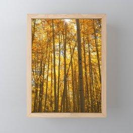 Golden light in Aspen Forest Framed Mini Art Print