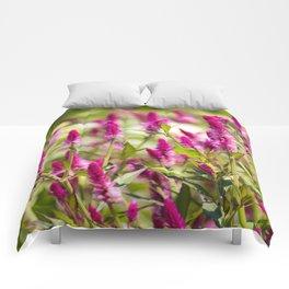 Colorful Celosia Comforters