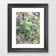 Desert Flower I Framed Art Print