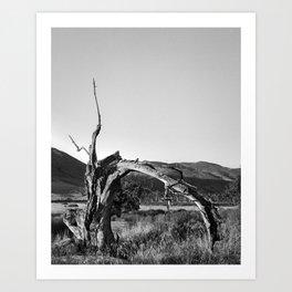 Timber VII Art Print