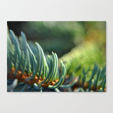 Spruce in the Morning Canvas Print