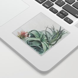 Air Plant Collection Sticker