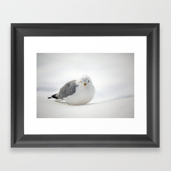 Snow Gull Framed Art Print