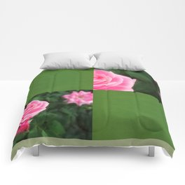 Pink Roses in Anzures 1 Blank Q5F0 Comforters