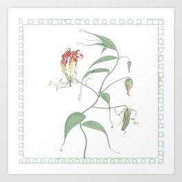 Gloriosa Superba (Climbing Lily) Art Print