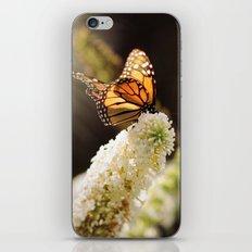 Butterfly Sunshine iPhone & iPod Skin