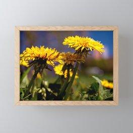 Concept flora : Dandelions in a field Framed Mini Art Print
