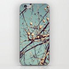 Mountain Nature iPhone & iPod Skin