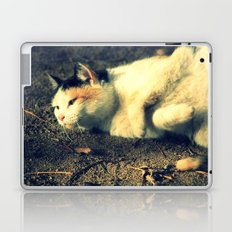Tabby Laptop & iPad Skin