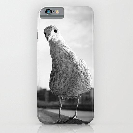 Inquisitive seagull iPhone & iPod Case
