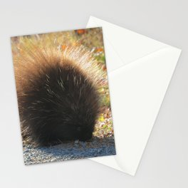 Porcupine Looking Glamorous in the Sun's Rays Stationery Cards
