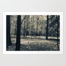 The Serene Forest Art Print