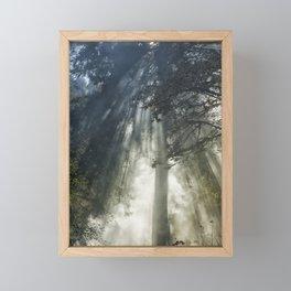 Smoke and Sun Filtered Through a Fir Tree Framed Mini Art Print