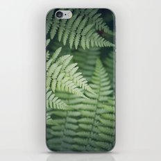 Where the Redwood Fern Grows iPhone & iPod Skin
