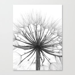 Black and White Dandelion Canvas Print