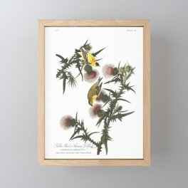 Goldfinch And Thistle Framed Mini Art Print