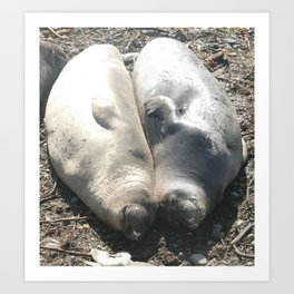 seal love Art Print