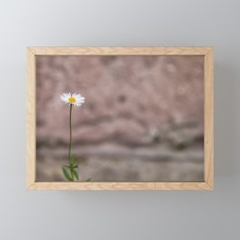 One Daisy Framed Mini Art Print