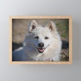 American Eskimo Framed Mini Art Print