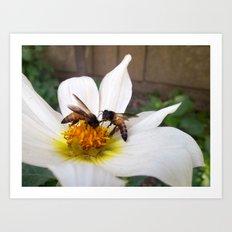 Bees at Work Art Print