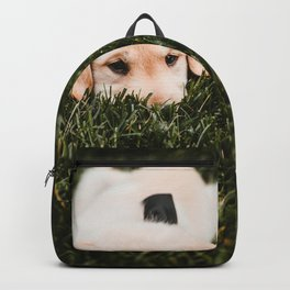 Cute puppy by Drew Hays Backpack