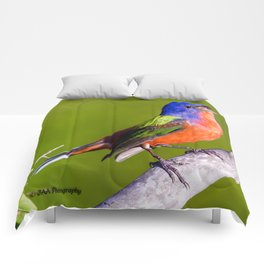 Male Painted Bunting Defending his Territory Comforters