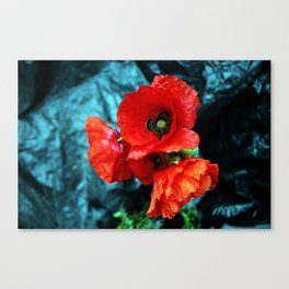 Poppy flower bouquet Canvas Print