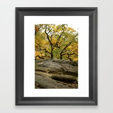 Central Park in the Fall Framed Art Print