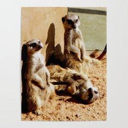 Meerkat Togetherness Poster