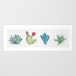 Succulent Sampler with Echoveria, Beavertail Cactus, Blue Chalk Sticks, and Zebra Plant Art Print