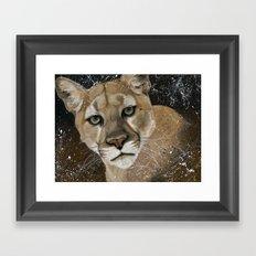Mountain Lion Framed Art Print