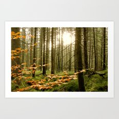 Morning Shines Through Art Print