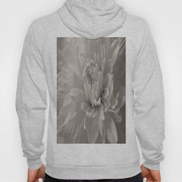 Monochrome chrysanthemum close-up Hoody