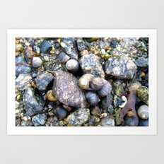 mussels. Art Print