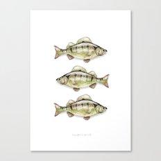 European Perch Canvas Print