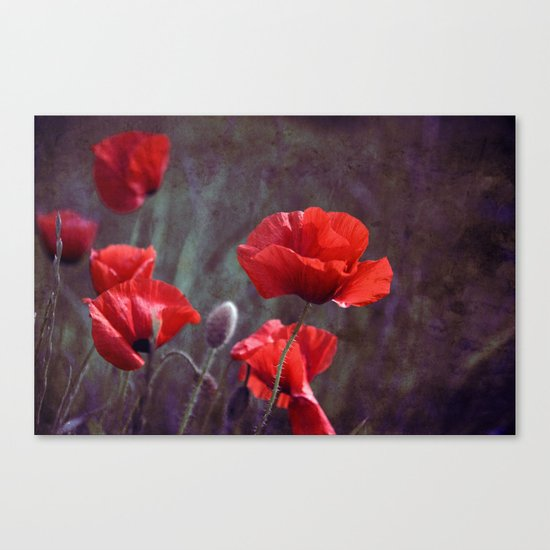red poppyfield  Canvas Print