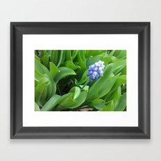 Blue Grape Framed Art Print