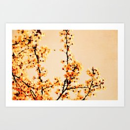 SPRING BLOSSOMS IN ORANGE Art Print