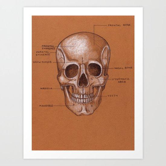 Jesse Young's Human Anatomy Drawing of the SKULL (Circa 2005) Art Print