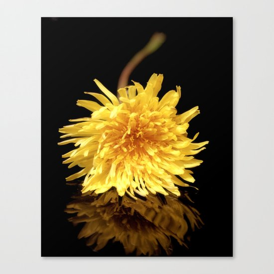 Dandelion Flower on Black Canvas Print