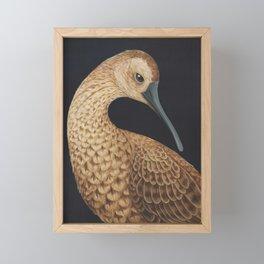 Eskimo Curlew (Numenius borealis) Framed Mini Art Print