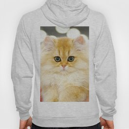 Very young red fluffy cat Hoody