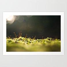 Sporophytes Art Print