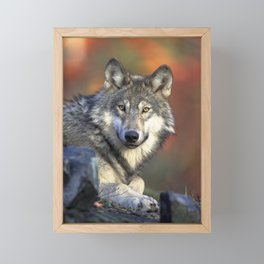 Wild Wolf Photo Framed Mini Art Print