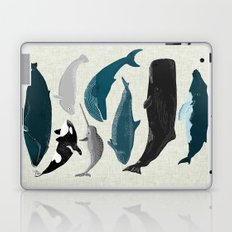 Whales and Porpoises sea life ocean animal nature animals marine biologist Andrea Lauren Laptop & iPad Skin