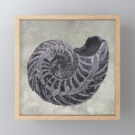Ammonite study Framed Mini Art Print