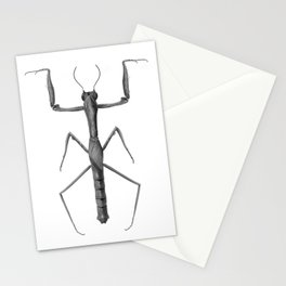 Danuria  affinis Stationery Cards